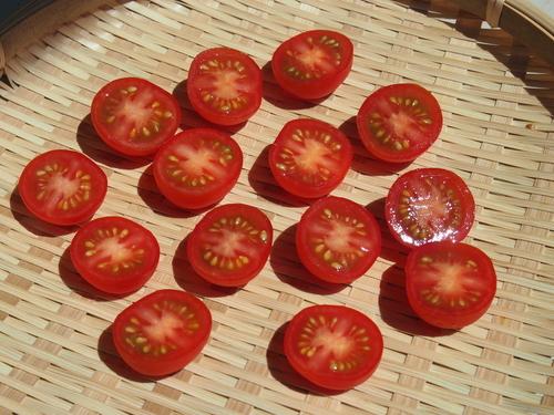 ドライトマトで栄養価UP!トマトを天日干し