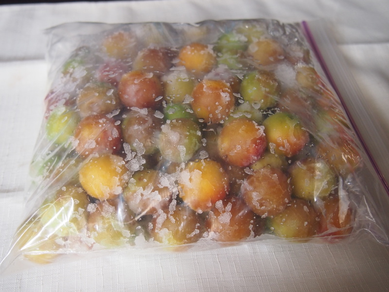 申年の梅は縁起が良い!!ジップロックで完熟梅で梅干し作り